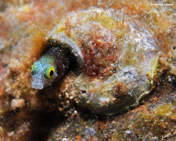 The wreck is home to lots of creatures, large and small.