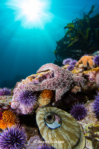 Eliminating backscatter is key to creating underwater beautiful images.