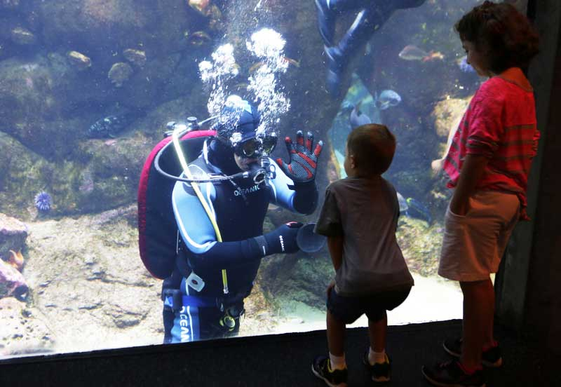 A diver says hello to a young visitor at the aquarium.