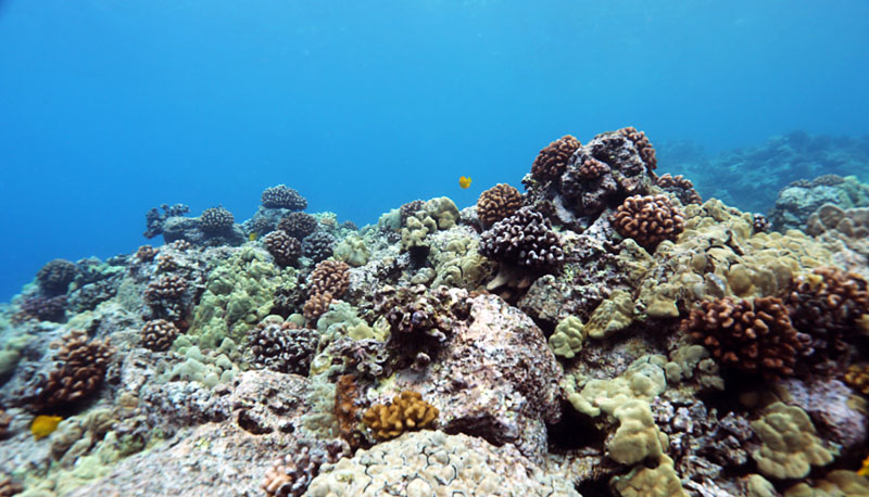 The area just offshore is covered with dense corals and beautiful sea life.