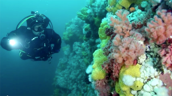 A screenshot from the Scuba Dive BC video