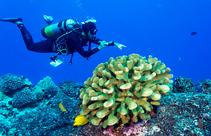 Kona Diving Company's Kerry Key points out all of the critters along the reef.