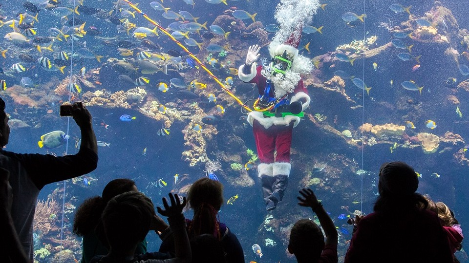 Scuba Santa diving in the Academy's Philippine Coral Reef exhibit.