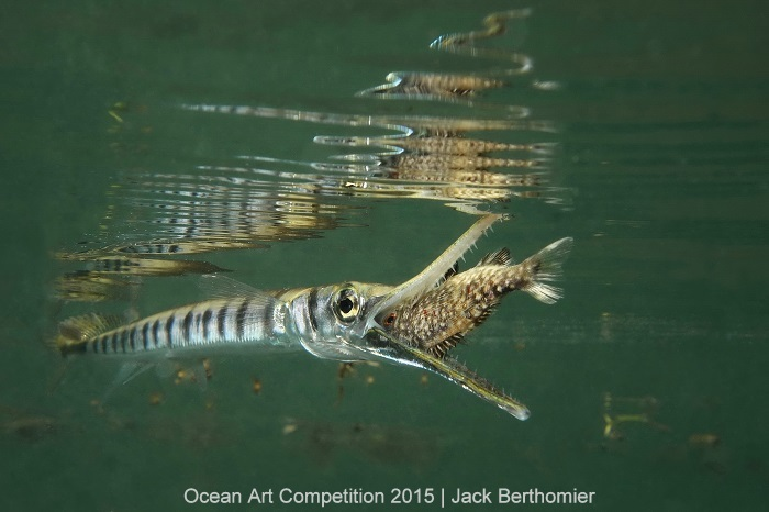 1st Place, marine life behavior - Jack Berthomier. Shot in Ouemo Bay, Noumea, New Caledonia with Sony RX100