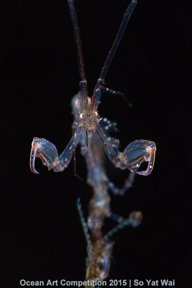 1st Place, super macro - So Yat Wai. Shot in Tulamben, Bali, Indonesia with Canon 5D MkIII