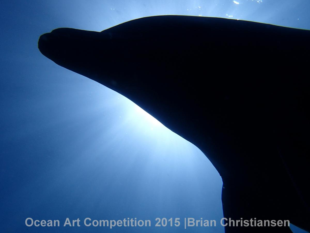 1st Place - Brian Christiansen. Shot in Deshaies, Guadeloupe with Olympus TG-3