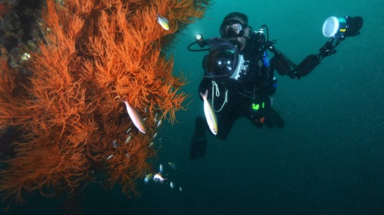Photographing marine life on the sides of the Okikawa wreck