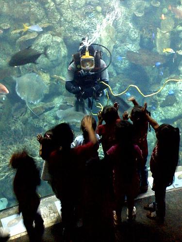 Diver S Day At Aquarium Of The Pacific California Diver