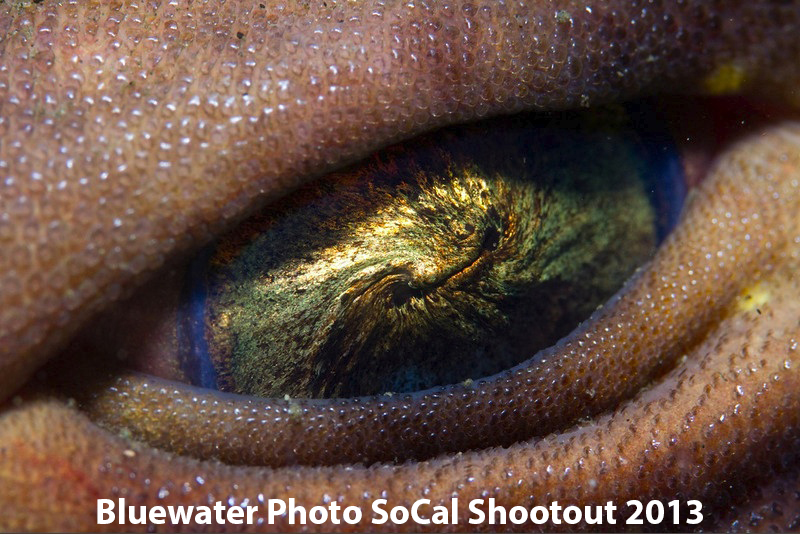 First Place Macro: Craig Hoover - Shark Eye