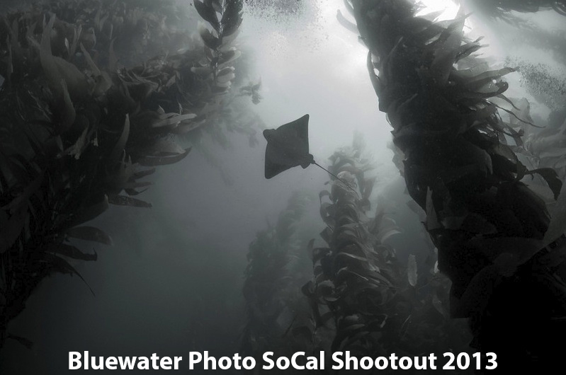 First Place Wide-Angle: Liz Sullivan - Bat Ray