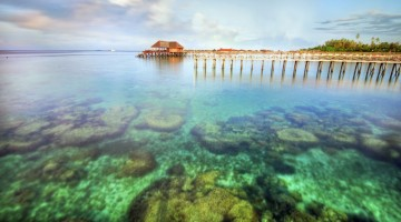 Beautiful coral at Mabul Island resort