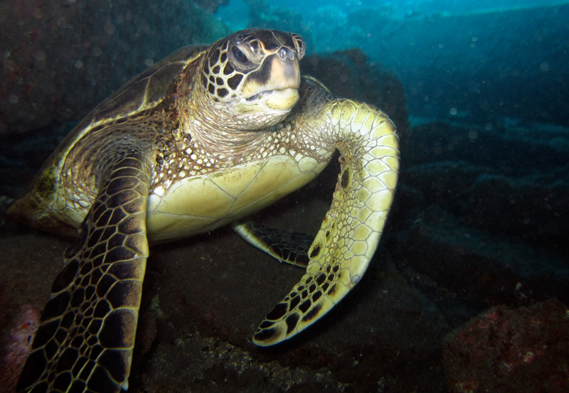 Turtles are abundant in the entire 5 Caves area