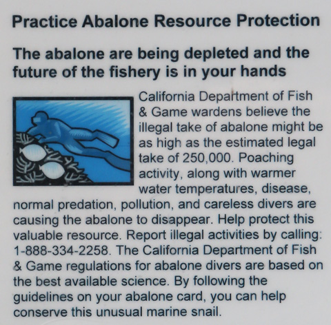 Abalone poacher pleads guilty may serve 3 years in prison for California lifetime fishing license