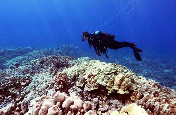 Hawaii Dive Association Completes First Scuba Diving