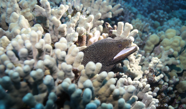 A beautiful speckled moray comes out to greet us.