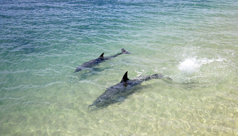 Diving with dolphins in the wild at Mona Mia