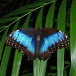 The Butterfly Garden on Aruba is home to many species of fascinating insects