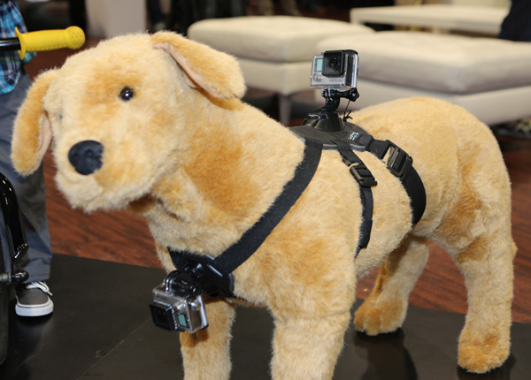 You can attach a GoPro to almost anything – including your dog.