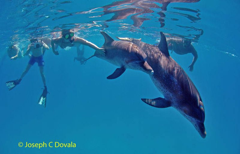 Group-with-dolphins