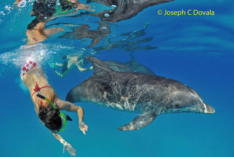 dive-with-dolphins