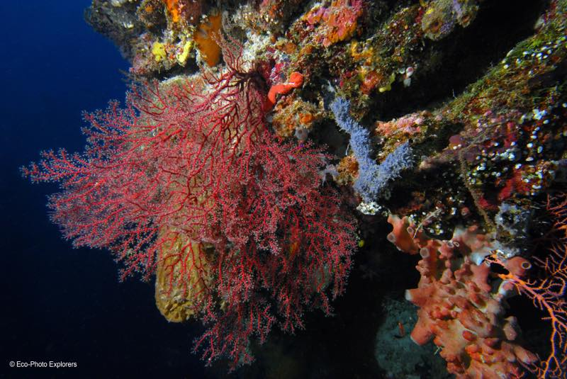 The vibrant corals of Apo Reef