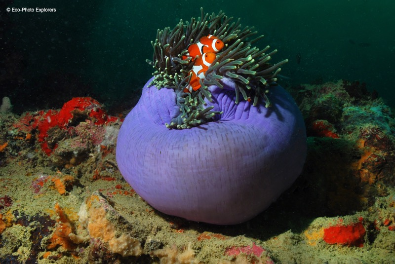 The wrecks of Coron are home to a beautiful array of indo-pacific marine creatures