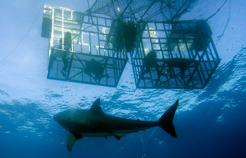 Shark_Divers_Cage_DP