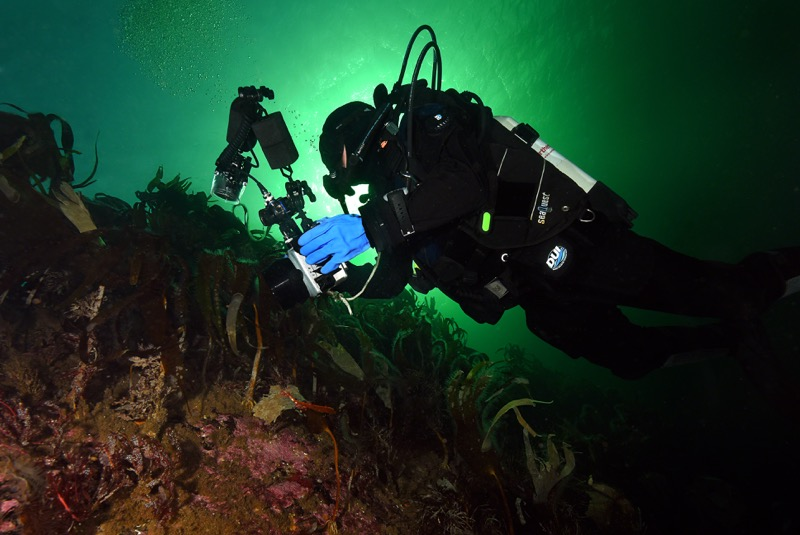 Christopher Weaver exploring the kelp gardens